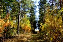 Na prechádzke lesom pri hranici Európy a Ázie
