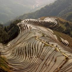 Pohľad na obrovské ryžové polia