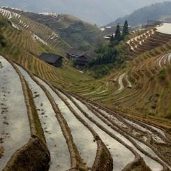 """Ryžové polia mali svoju atmosféru aj napriek tomu, že bolo po ich """"zelenej sezóne"""""""