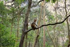 Bolo potrebné si dávať pozor na všadeprítomné opičky-lupičky (Zhangjiajie Forest Park)