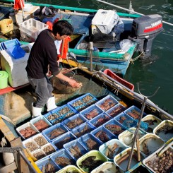Plávajúci rybí trh v rybárskej vesničke Sai Kung