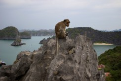 Na vrcholku ostrova Monkey Island nemohla predsa opica chýbať