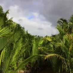 06_Palmy-dzungla