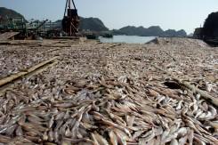 Sušené ryby, rybky, rybičky