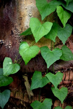09_Obrasteny-strom