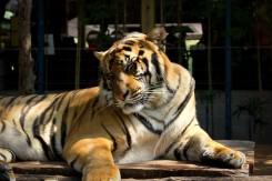 Taká väčšia mačička, s ktorou sme sa mohli ňufikať:)