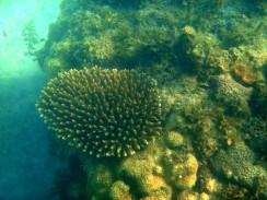 09_Coral-Coconut-Beach