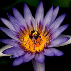 09_Kvetina-vcielka