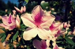 Ako v každej krajine, aj vo Vietname je množstvo kvetiniek
