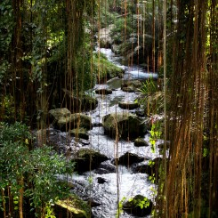 Bali je neskutočne zelené a zarastené