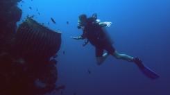 Čo to tam v tom obrovskom korale môže byť? :)