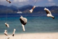Koraly a mušle často nájdu rôzne využitia