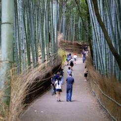 Bambusová alej - pekná ale čakali sme niečo viac :)