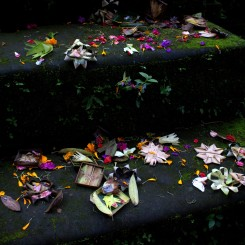Každý deň miestny hinduisti pripravujú dary v podobe jedla, kvetov alebo vonných tyčiniek a pokladajú ich v blízkosti svätýň