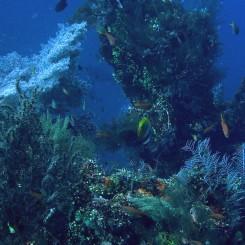Koraly, sasanky a ryby všetkých tvarov a farieb - pod vodu sa v Tulambene určite oplatí ísť